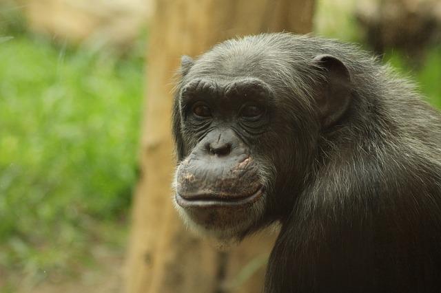 monkey-757210_640