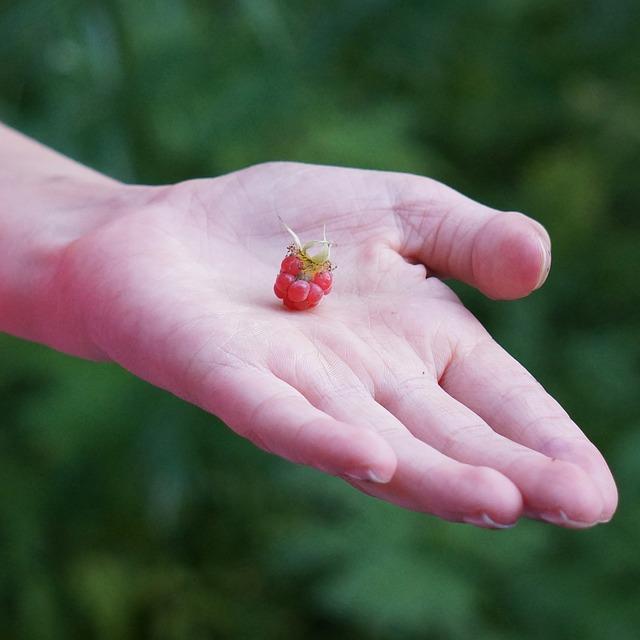raspberry-handed-166378_640