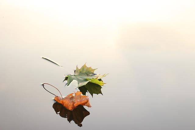 maple-leaves-690233_640