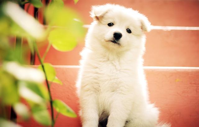 dog-1443468_640